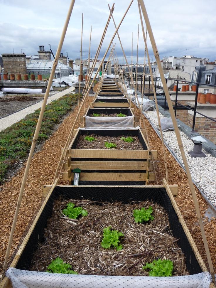 Potager sur le toit d'AgroParisTech, Nicolas Bel et Nicolas Marchal