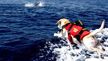 i cani bagnino,un primo bilancio dell'estate 2013