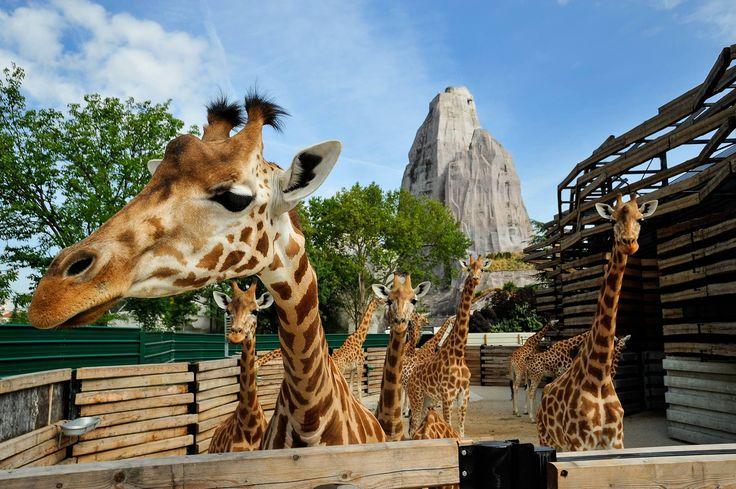 Parc Zoologique de Paris - 53 avenue de Saint-Maurice, 75012 Paris