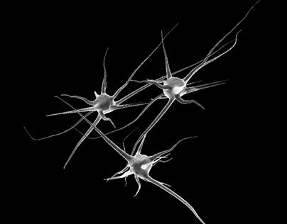 """Check out new work on my @Behance portfolio: """"3 Neurons"""" http://be.net/gallery/35774519/3-Neurons"""