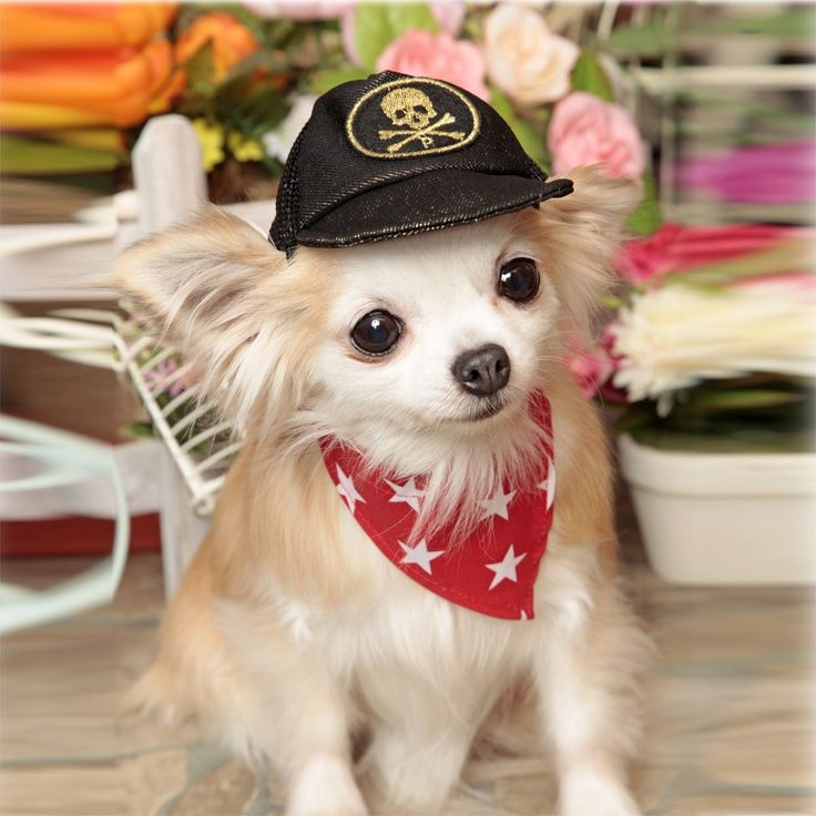 Lovely and pleasant Doggy bandana star for your cute pet dogs. https://www.gokoco.com/gkc/pet-supplies-pet-accesories/pets-clothing/lovely-and-pleasant-doggy-bandana-star-for-your-cute-pet-dogs.html