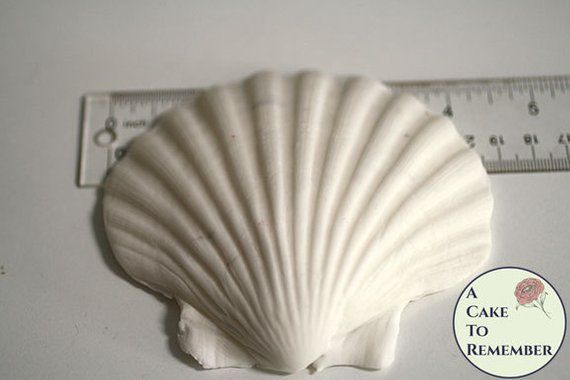 4 3d Clam Shell Silicone Mold For Cake Decorating Or Etsy Beach Themed Cakes Gum Paste Cake Decorating