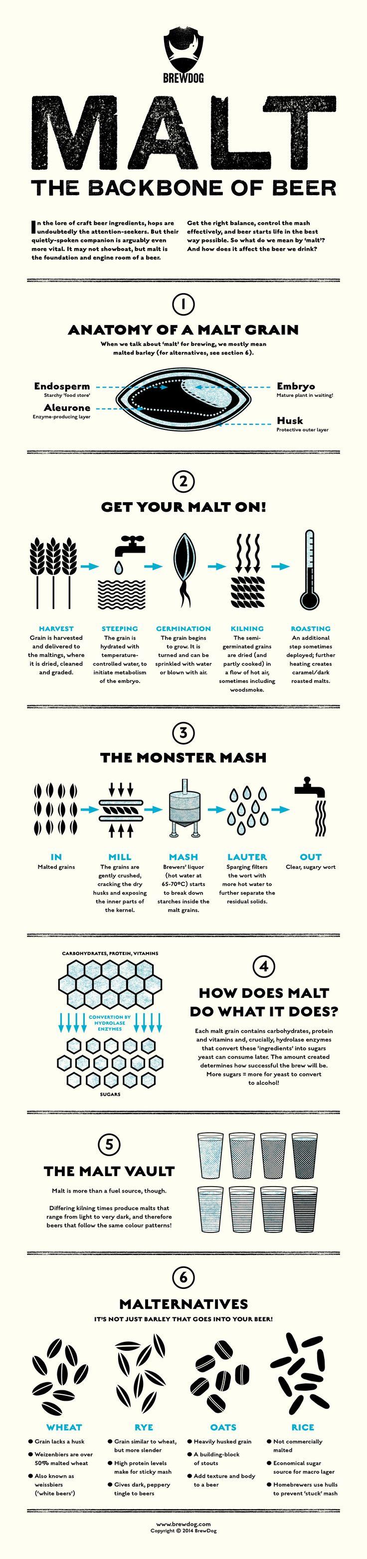 Infographic Malt the Backbone of Beer