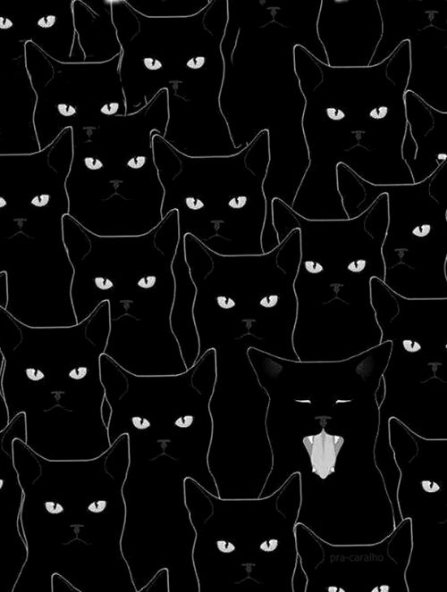 felixinclusis: Black cats seamless pattern von Evellean /// (bearbeitet) – print. colour. happiness