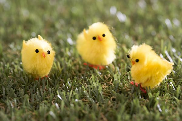Love this image: Three Easter decorative little fluffy chicken close-up on lawn grass - By stockarch.com user: easterstockphotos