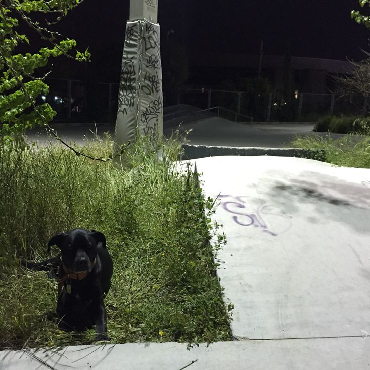 Mushi and the skatepark