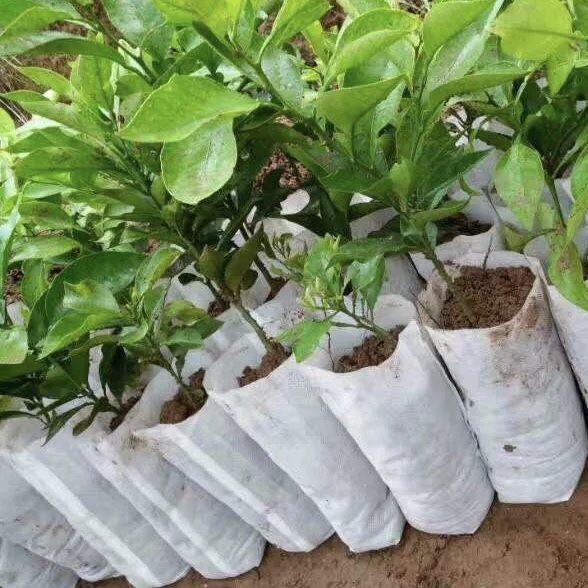 200 Pcs Plant Fiber Nursery Pots
