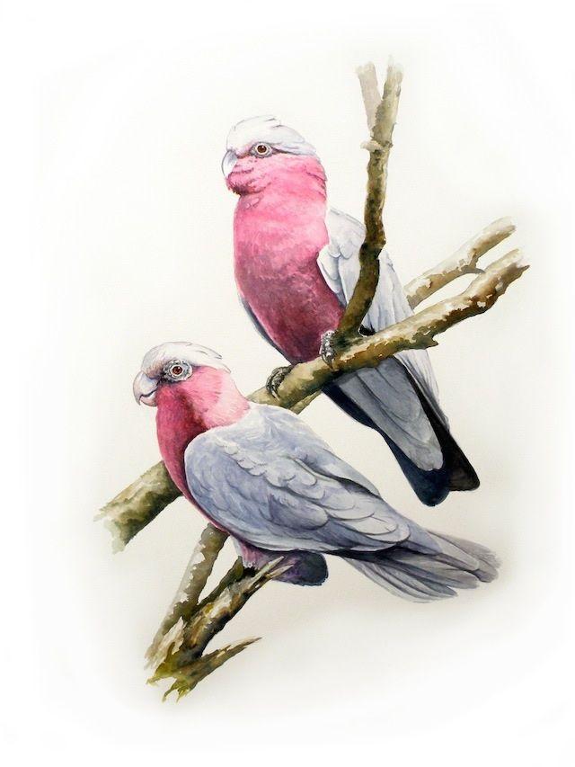Galah Cockatoos watercolour - Absolute Hooligan art by Tim Niall-Harris
