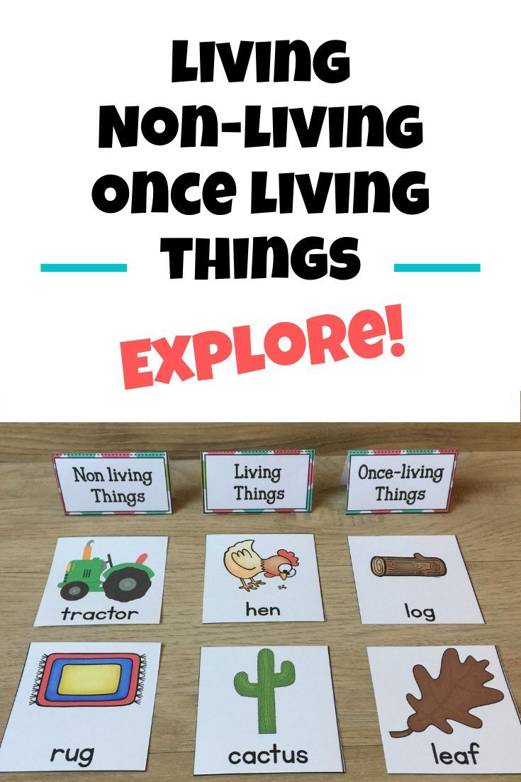 Living Nonliving Once Living Exploration Unit Living And Nonliving The Unit Activities [ 1102 x 735 Pixel ]