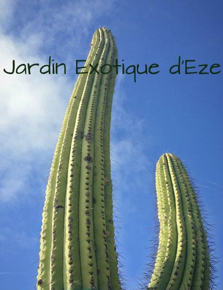 Exotic Cactus Gardens of Eze, South of France