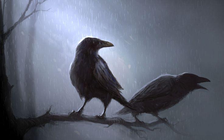Raven vs Crow 2560x1600 RAVENS CROWS Pinterest