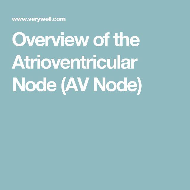 Overview of the Atrioventricular Node (AV Node)