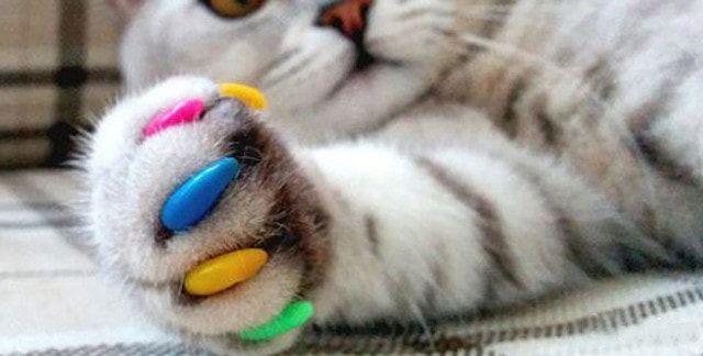 Накладки на кошачьи когти