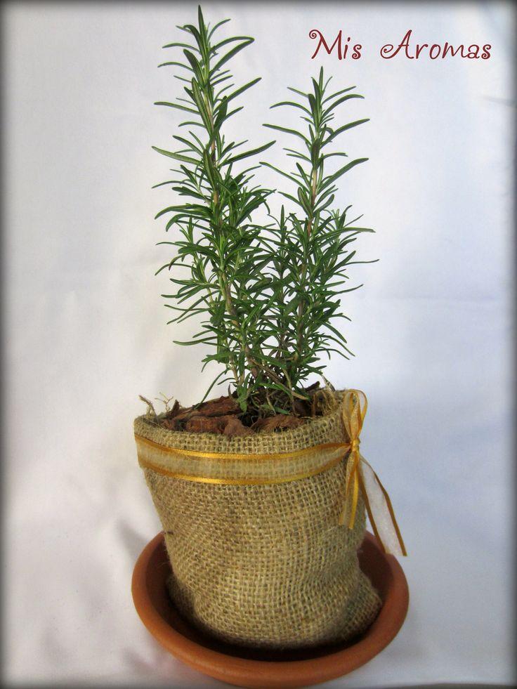 Centros de mesa para casamientos con plantas arom ticas en - Plantas aromaticas en maceta ...