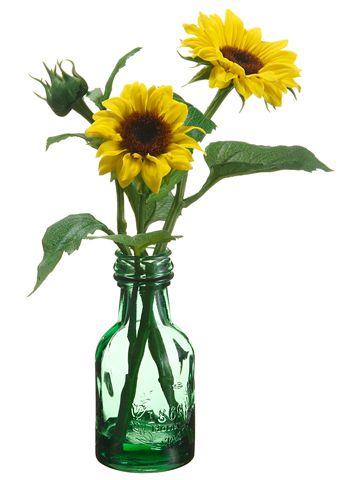 54 Best Sunflower Farm Images On Pinterest Sunflowers