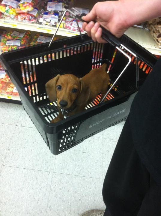 weenie in a basket