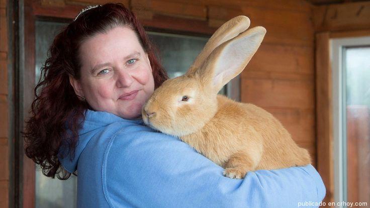 Atlas, el conejo gigante, encuentra un hogar