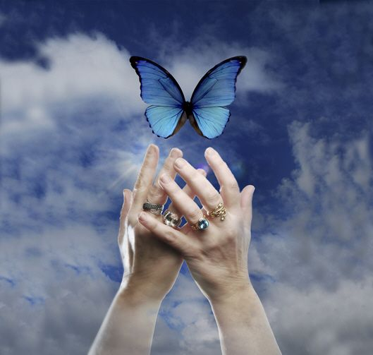 Spiritual Butterfly Quotes: 64 Best Images About ~BUTTERFLY EFFECT~ On Pinterest