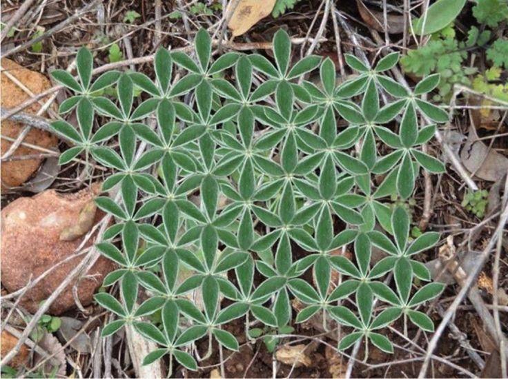 Was uns die Natur über heilige Geometrie lehren kann...