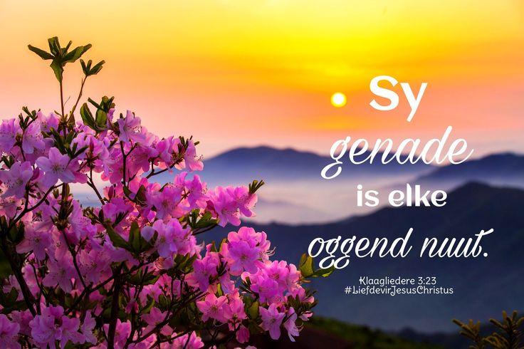 God se genade is elke oggend nuut. #genade #elkedagnuut #geseënd #God #Here #Vader #HeiligeGees #Jesus #JesusChristus #LiefdevirJesusChristus