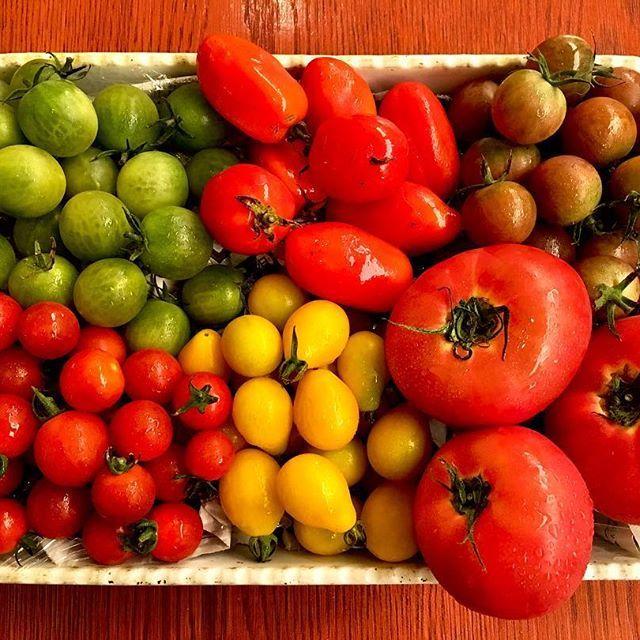 【月一恒例企画】 8月のラゴッチャ注目食材はトマト🍅!山梨県のベジモアファームさんから仕入れさせて頂きました。見た目にも鮮やかなトマトを様々なお料理で楽しんでもらえると思います! 一番甘いのは緑色のトマト「みどりちゃん」。色からは想像出来ませんでしたが、トマトの新しい一面を発見できました! #山梨県#ベジモアファーム #トマト #白金台 #ラゴッチャ東京#lagocciatokyo #イタリアン#イタリア料理#italian #肉#秋川牛#黒毛和牛 #ワイン#wine#日本ワイン