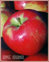 Honeycrisp apples are the best!!