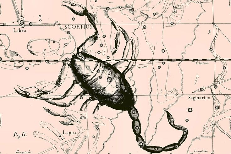 Choose Scorpio Constellation Map in Beige Wall Mural to create a fantastic wall decor in your room or browse thousands of other wall murals and custom wall murals only at Eazywallz.com