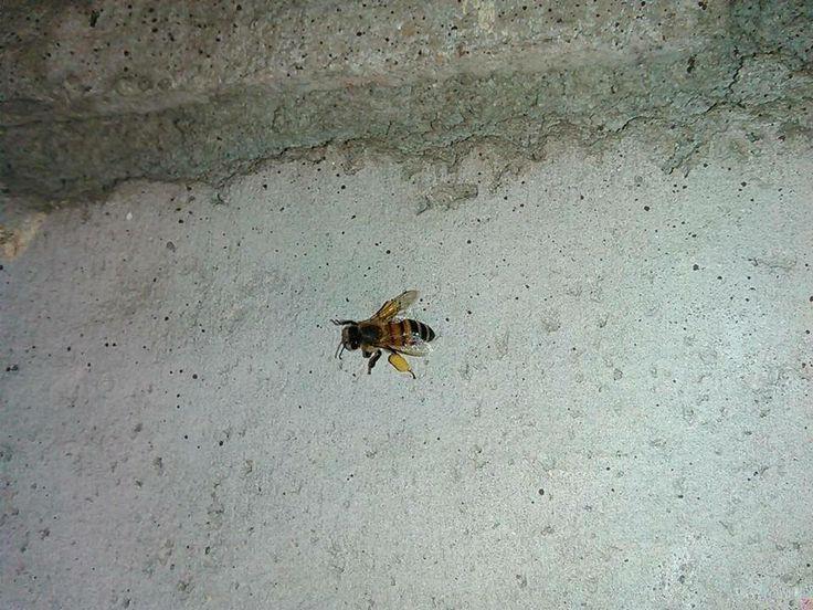 #BeeControl #Tucson