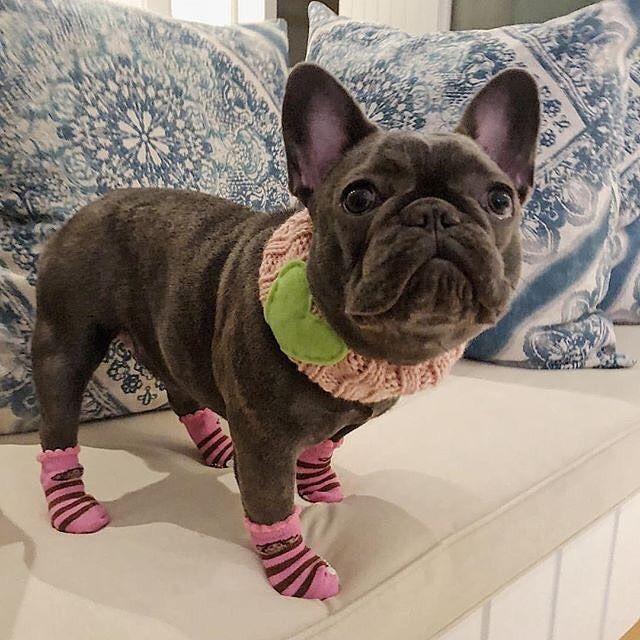 Dog Bulldog Puppy Cozy Warm Fleece Socks