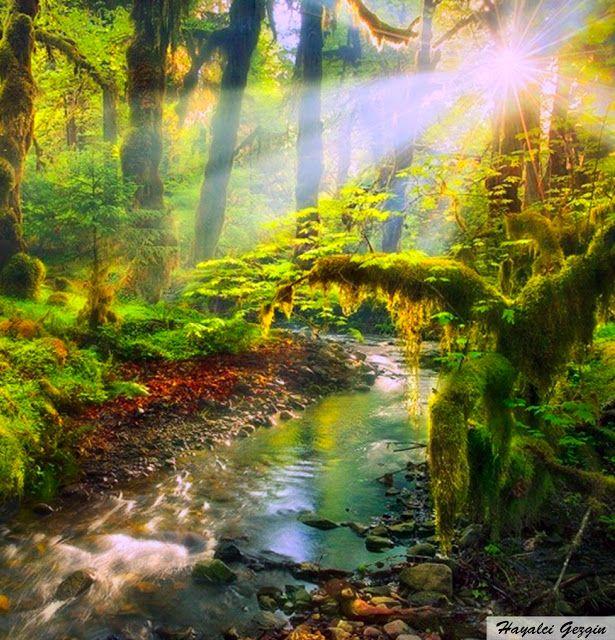 Hayalci Gezgin: Tropikal Ormanlar / Tropical Forest