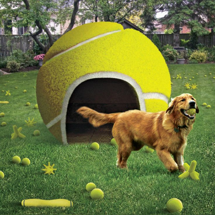 The Grand Slam: This fetching new addition to your backyard will leave your dog salivating with delight.