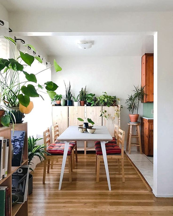 Good Dorm Room Plants