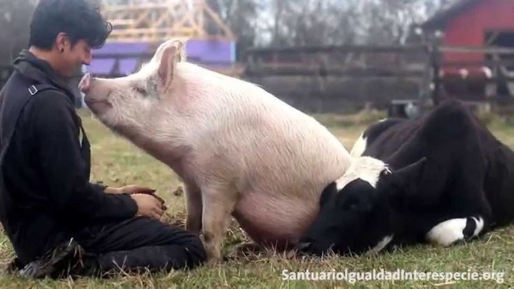 Love Without Limits: Adorable Rescues Snuggle Their Caretaker