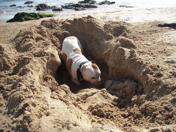 é o que mais gostava de fazer na praia,buracos