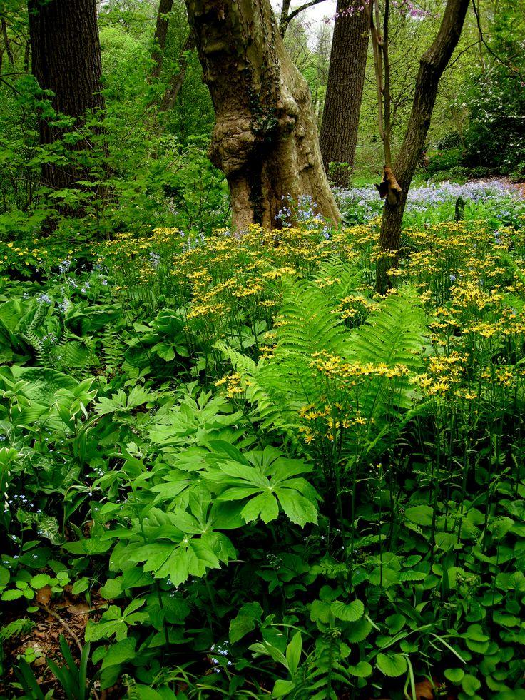 17 best ideas about woodland plants on pinterest for Woodland shade garden designs