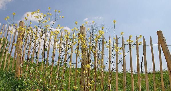 Naturzaun aus Kastanienholz mit Kastanienpfählen,Kastanienzaun auf Rollen, Rollzaun oder Staketenzaun, erhältlich in Emmendingen bei Freiburg