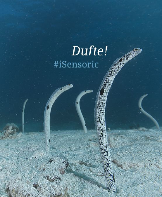 Eels have the best noses in the animal world! // Aale haben die besten Nasen im Tierreich! #iSensoric #Siemens