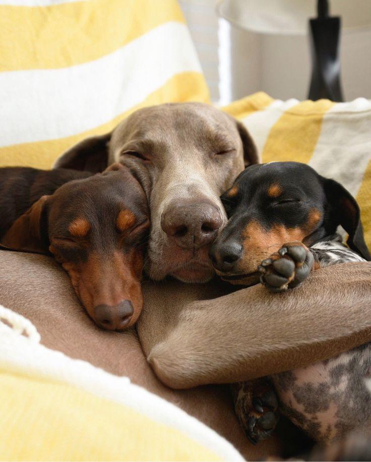 Indiana, Harlow & Reese - Cuddle Puddle