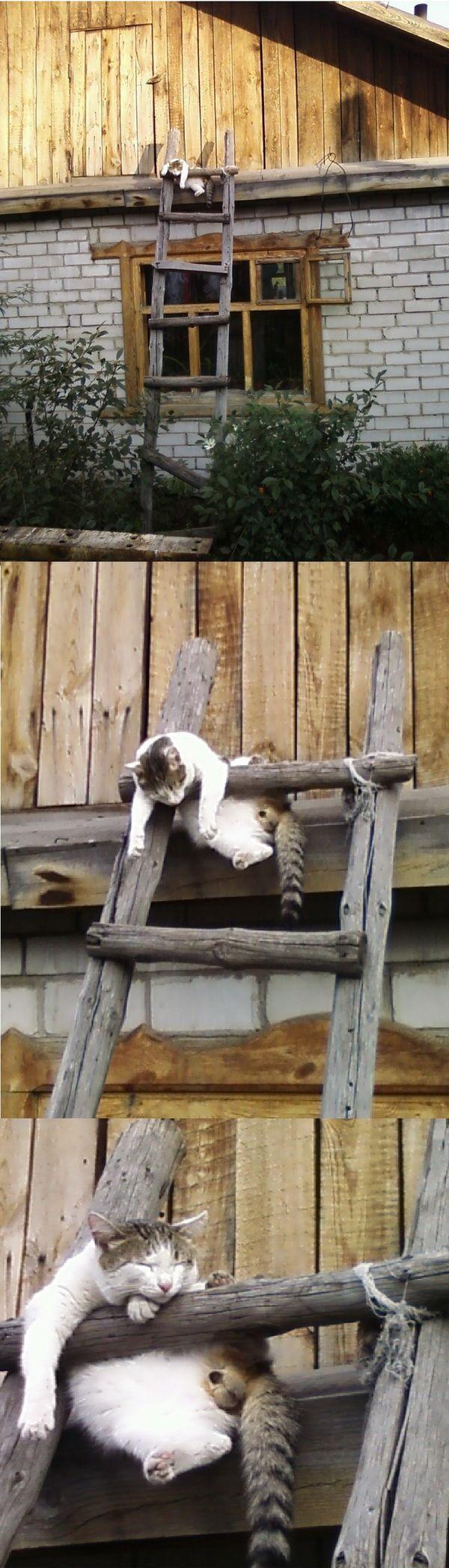 面白い猫画像 13|ねこLatte+