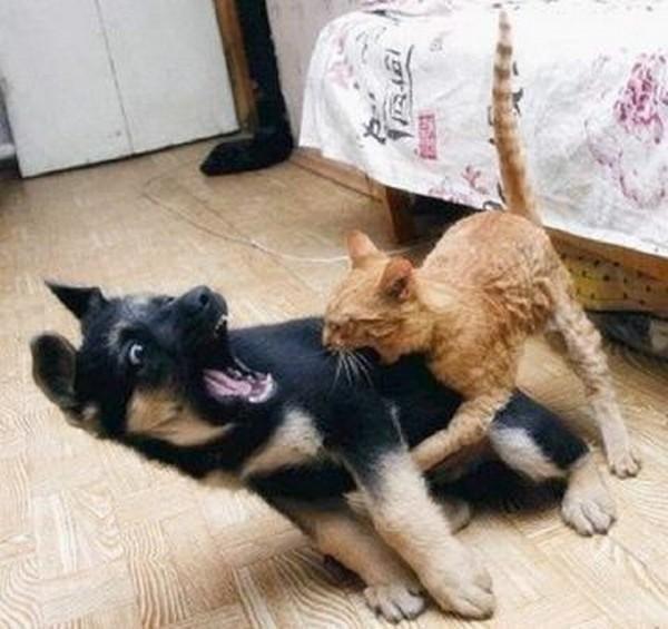 Vicces állatos képek!