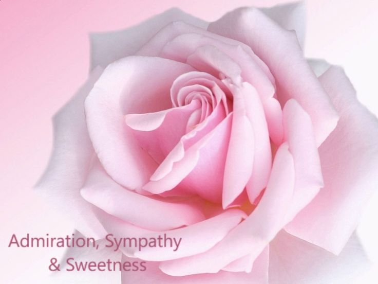 16 best Symbolic Colors of Roses images on Pinterest | Roses ...