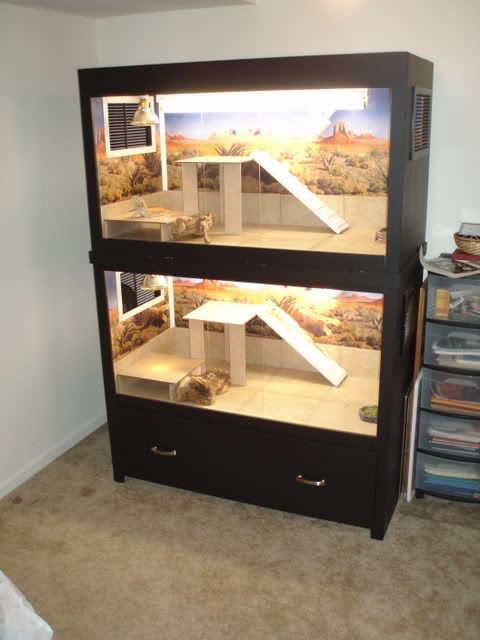 25 Best Ideas About Bearded Dragon Enclosure On Pinterest