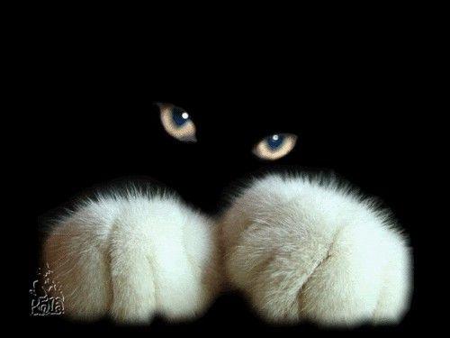 Olho de gato com patinhas brancas