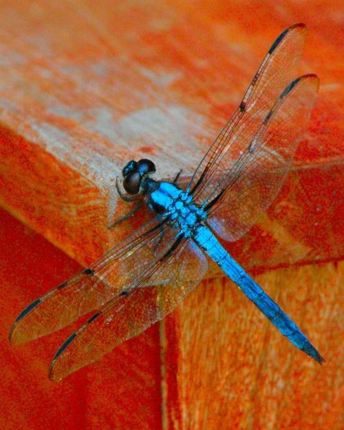 Dragonfly                                                                                                                                                     More
