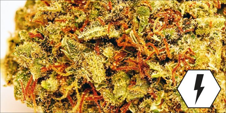 Laughing Buddha: This Feel-Good Sativa Will Help Fight Depression