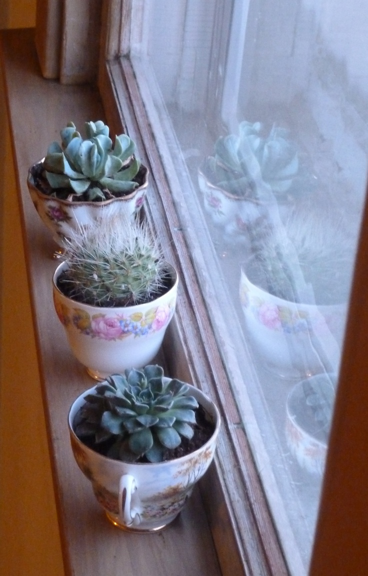 reusing inherited teacups as a windowsill garden of succulents and cactus.