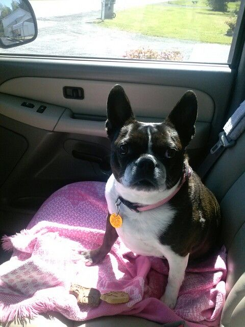 Kandi rode with mom to the drugstore to get daddy's medicine and she got two dog treats from the lady at the drive thru window.