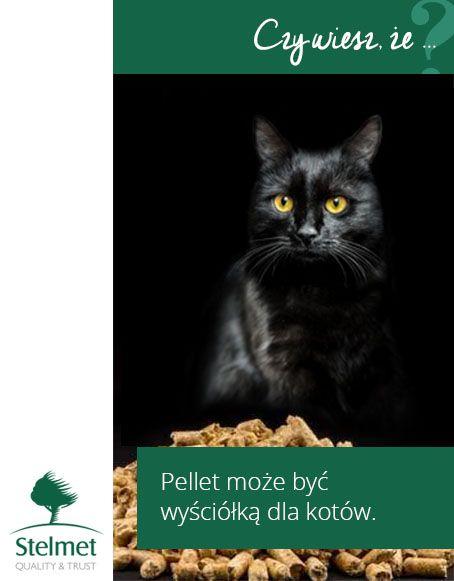 Pellet może być wyściółką dla kotów.