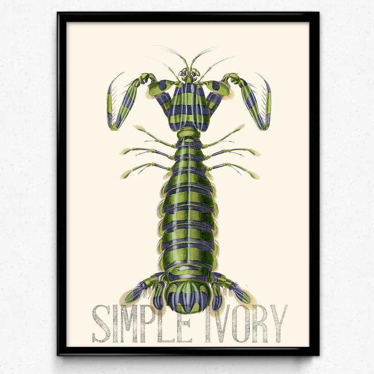 16 besten mantis shrimp/シャコ Bilder auf Pinterest ...