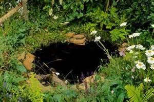 sloping wildlife ponds - Bing images